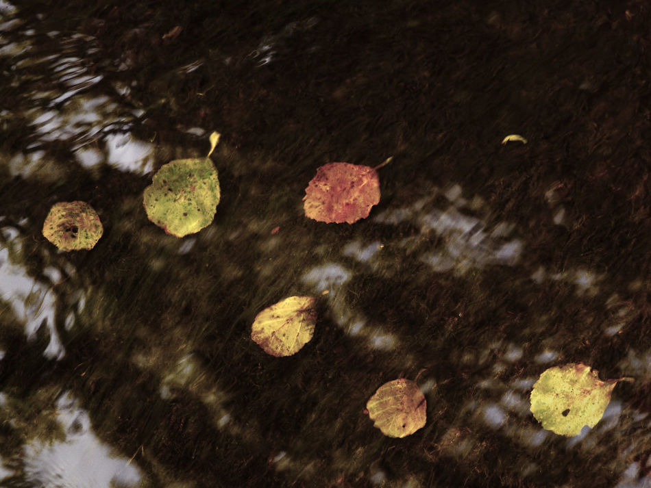 Autumn Autumn Colors Autumn Leaves Colors Colors Of Autumn Nature Photography The Week On EyeEm Beauty In Nature Beauty Of Nature Close-up Day Leaves Leaves On The Water Nature Nature_collection No People Outdoors Reflections River Shallow Shallow Water Water