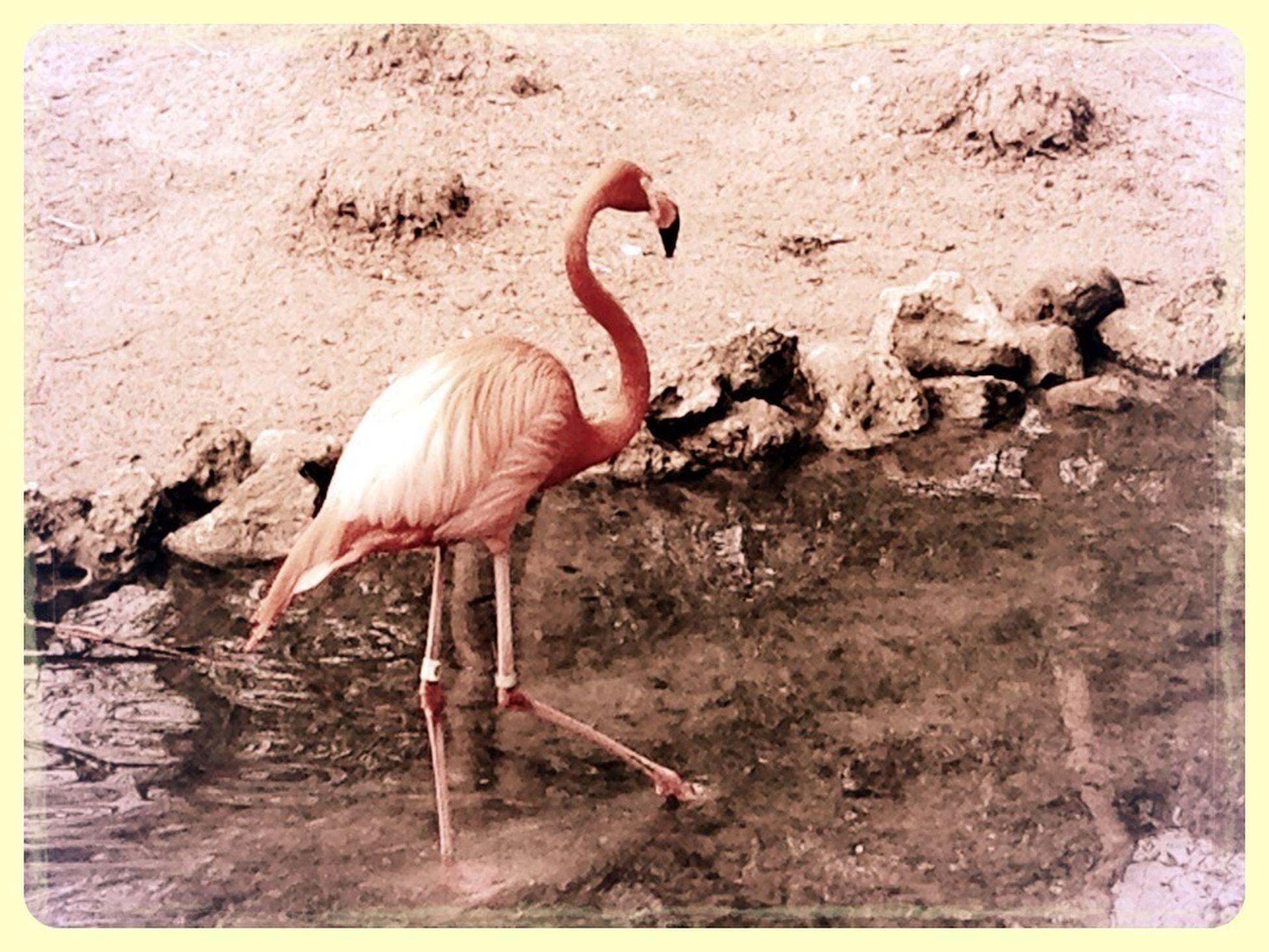 bird, animal themes, wildlife, day, animals in the wild, flamingo, nature, outdoors, one animal, beak, side view, focus on foreground, textured, no people, zoology, arid climate, carefree, relaxation, recreational pursuit