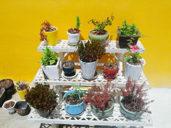 The Color Of School Plant Potted Plant Yellow Houseplant Flower Jeju Island, Korea Jejudo Elementary School Korea