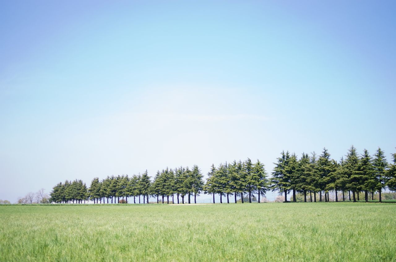 Trees On Grassy Field Against Clear Sky