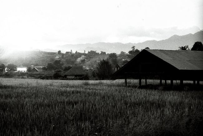 Rice field Chiang Mai | Thailand Rice Field Black And White Rice Production Film Photography Nikon F2 Northern Thailand Original Experiences Thailand_allshots Paddy Field Hut Cultivation Mountains Growing Plants Harvest Farming Agriculture Crops Annual Plant Landscape Film Nature Newtalent Showcase July