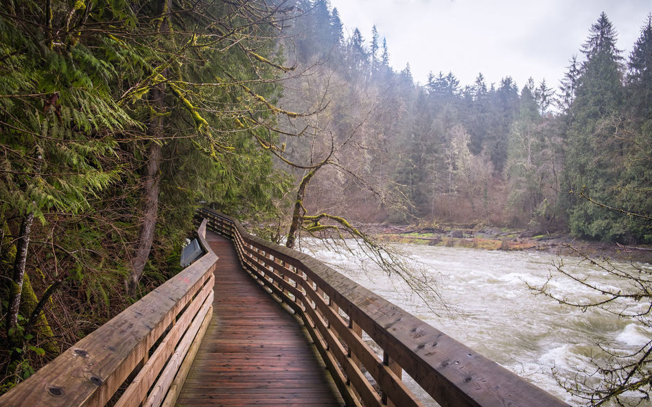 Beauty In Nature Bridge - Man Made Structure Day Footbridge Forest Landscape Nature No People Outdoors Scenics Sky Snoqualmie Falls The Way Forward Tranquil Scene Tranquility Tree