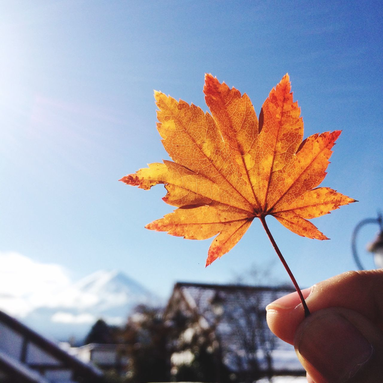Autumn color. Human Hand One Person Real People Autumn Holding Human Body Part Leaf Human Finger Focus On Foreground Outdoors Maple Leaf Leisure Activity Change Day Sky Close-up Nature
