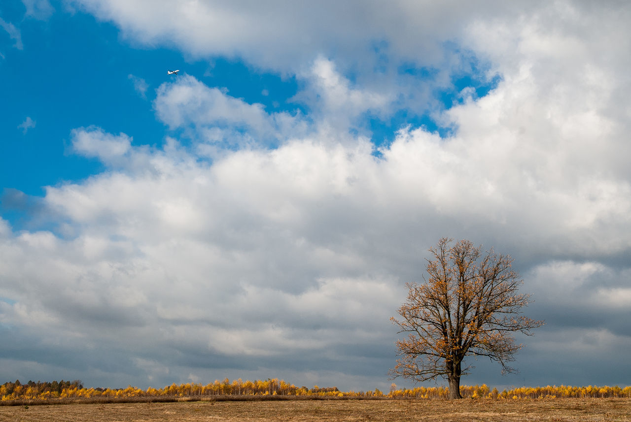 Aeroplane Beauty In Nature Cloud - Sky Clouds Day Fly In Background Growth Landscape Lonely Tree Nature No People Outdoors Poland Nature Scenics Single Tree Sky Tree