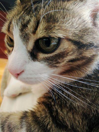 Cat Eyes Kitty