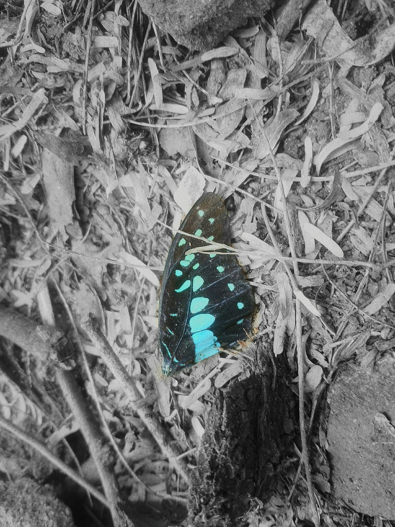 Butterfly ❤ Button Up Butterfly Wings Single Wing No People Blue Close-up Beauty In Nature Nature Cruality Crual World 😍😌😊 Sadness Sadness... Reality Death Death And Life 😱dead butterfly's wing, 😇Too blue but not sky, 🌏🌎🌍cruality is reality,😈 too stoned n jungle to pass by...