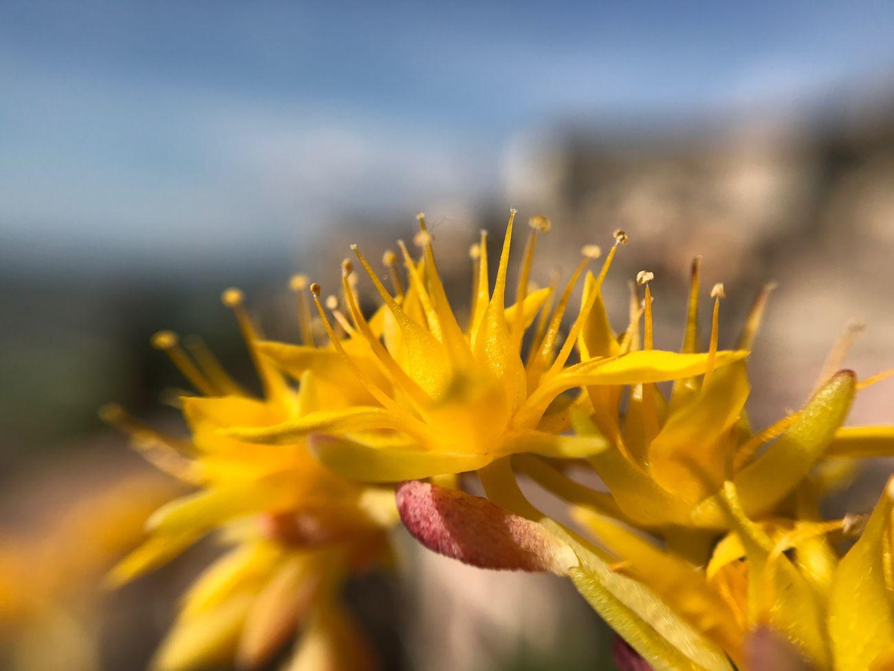 Macro Macro Photography Flower Yellow Yellow Flower Nature Floweroftheday Picoftheday Photo Photography Amazing Outdoors Springtime Todi  Umbria, Italy Italia Flower Head