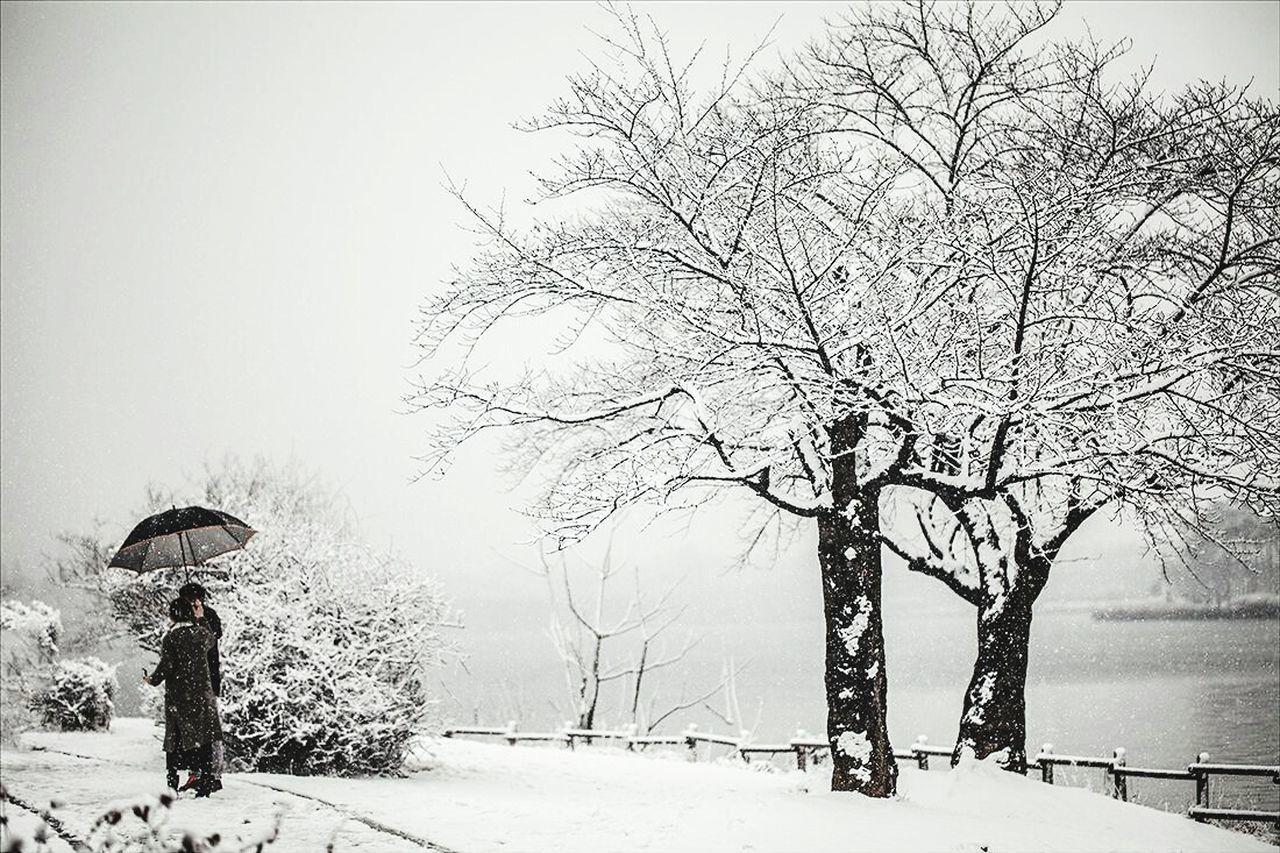 Snow ❄ Winter Snowy Landscape White Park Tree Snow Covered Trees Snow Covered Landscape Snow Covered Garden