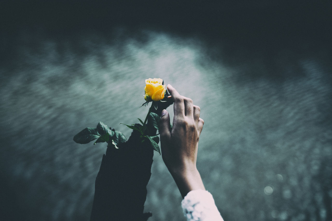 Alone Dark Darkness And Light First Eyeem Photo Flower Forest Girl Grain Hand Leaf Model Mood Outdoor Outdoor Photography People Plant Portrait Portrait Of A Woman Portrait Photography Tochigi Tree Water Woman Yellow Yellow Flower