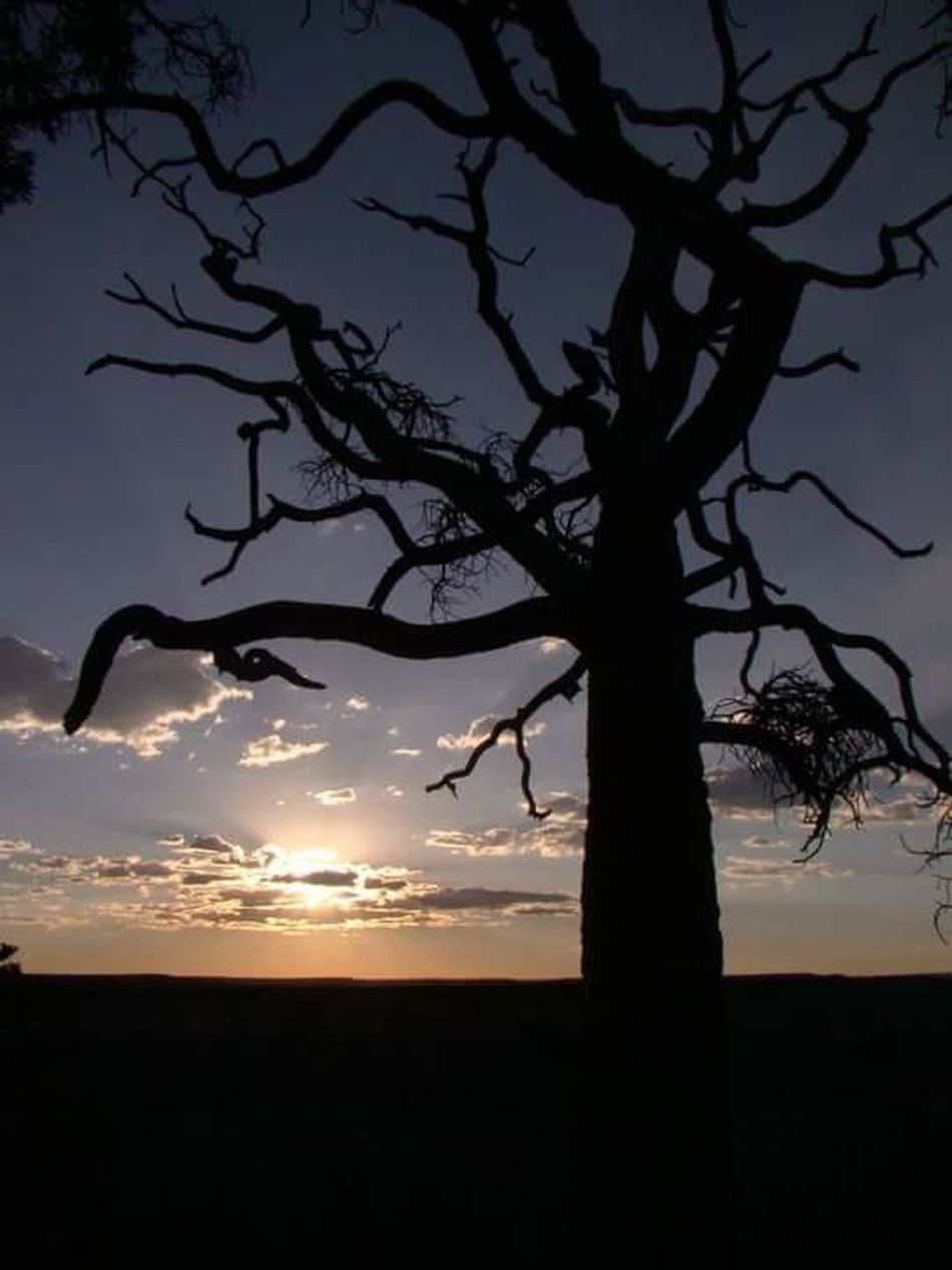 Hermit's Rest Grand Canyon Tree Branches Branches And Sky Sunset Sunset Silhouettes