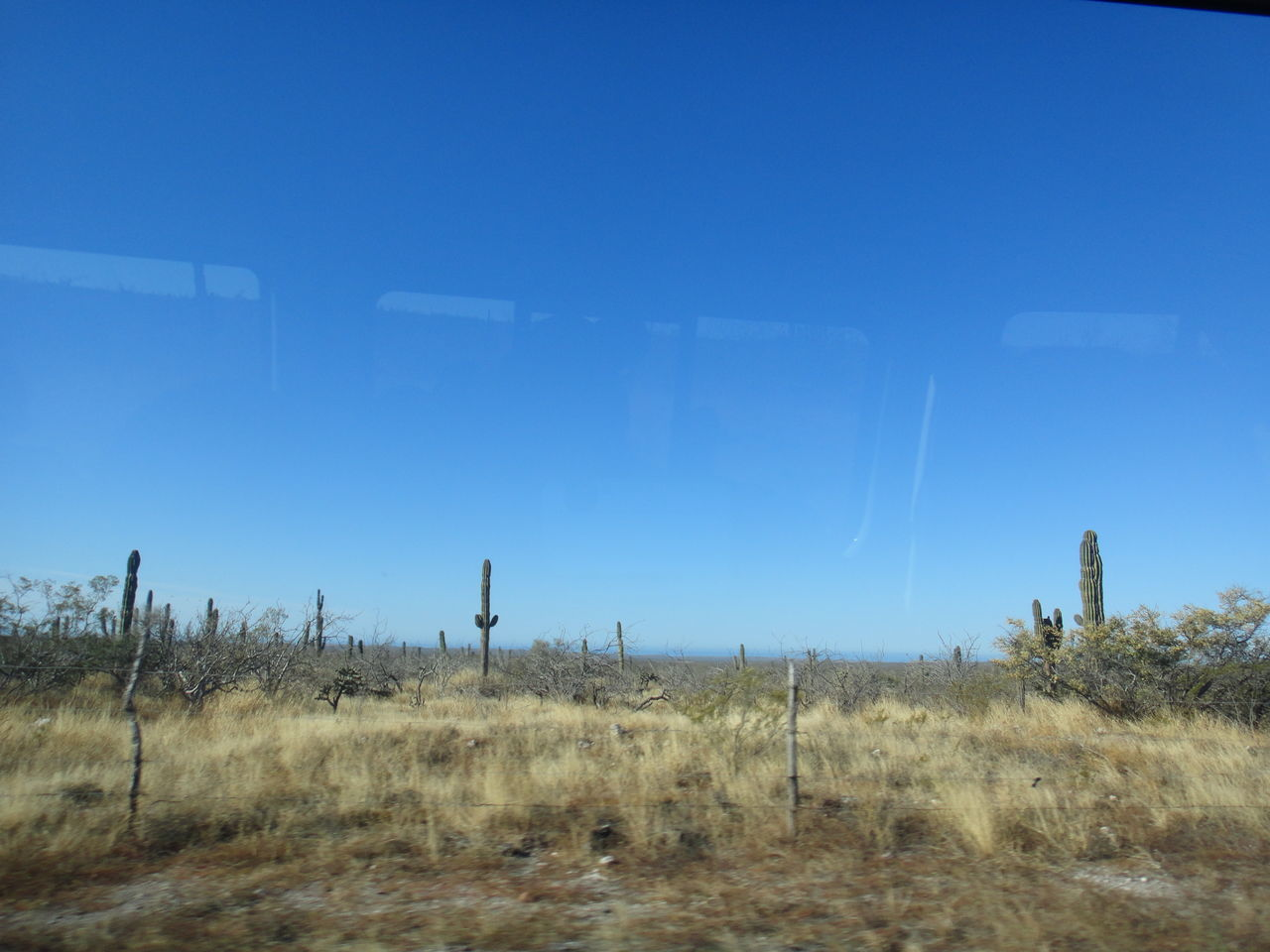 Bye Home Bye Desert Landscape Dry Grass, Cactus & Sky From The Window Nature Way To Travel