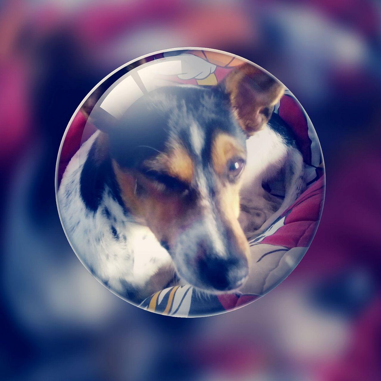 Wink Maica Dog Puppy Pets
