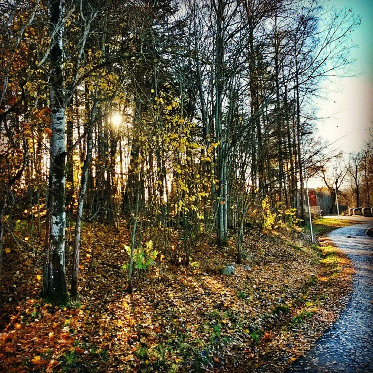 Ilovenorway Ilovenorway_akershus Follo   ås pentagon umb worldunion wu_norway autumn høst hdr ic_trees ig_week_autumn ig_week