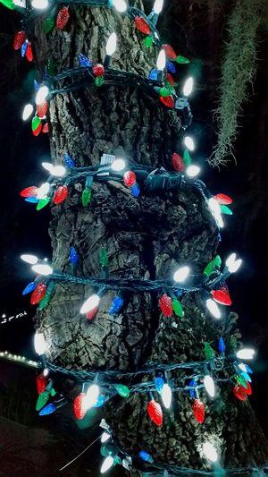 Christmas Lights Christmas Decorations Christmas Spirit Yuletide Yuletideseason Lights Decoration Christmas The Culture Of The Holidays