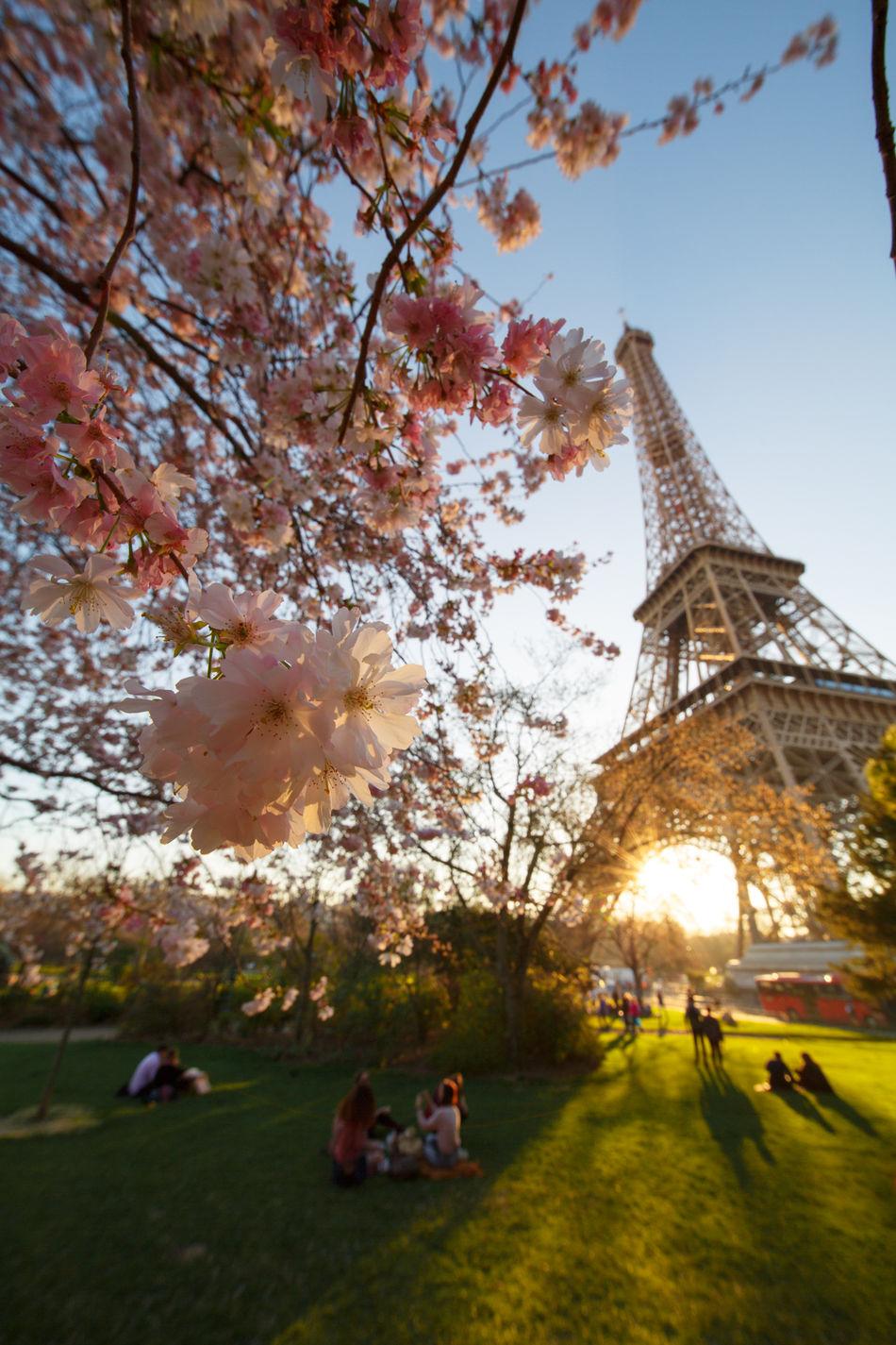 Spring Springtime Spring Flowers Pink Color Beauty In Nature 21march Flowers Blossom 🌼flowers🌼 Cerisier En Fleurs Printemps Tour Eiffel Flower Head C'est Le Printemps Laowa12mm Amour