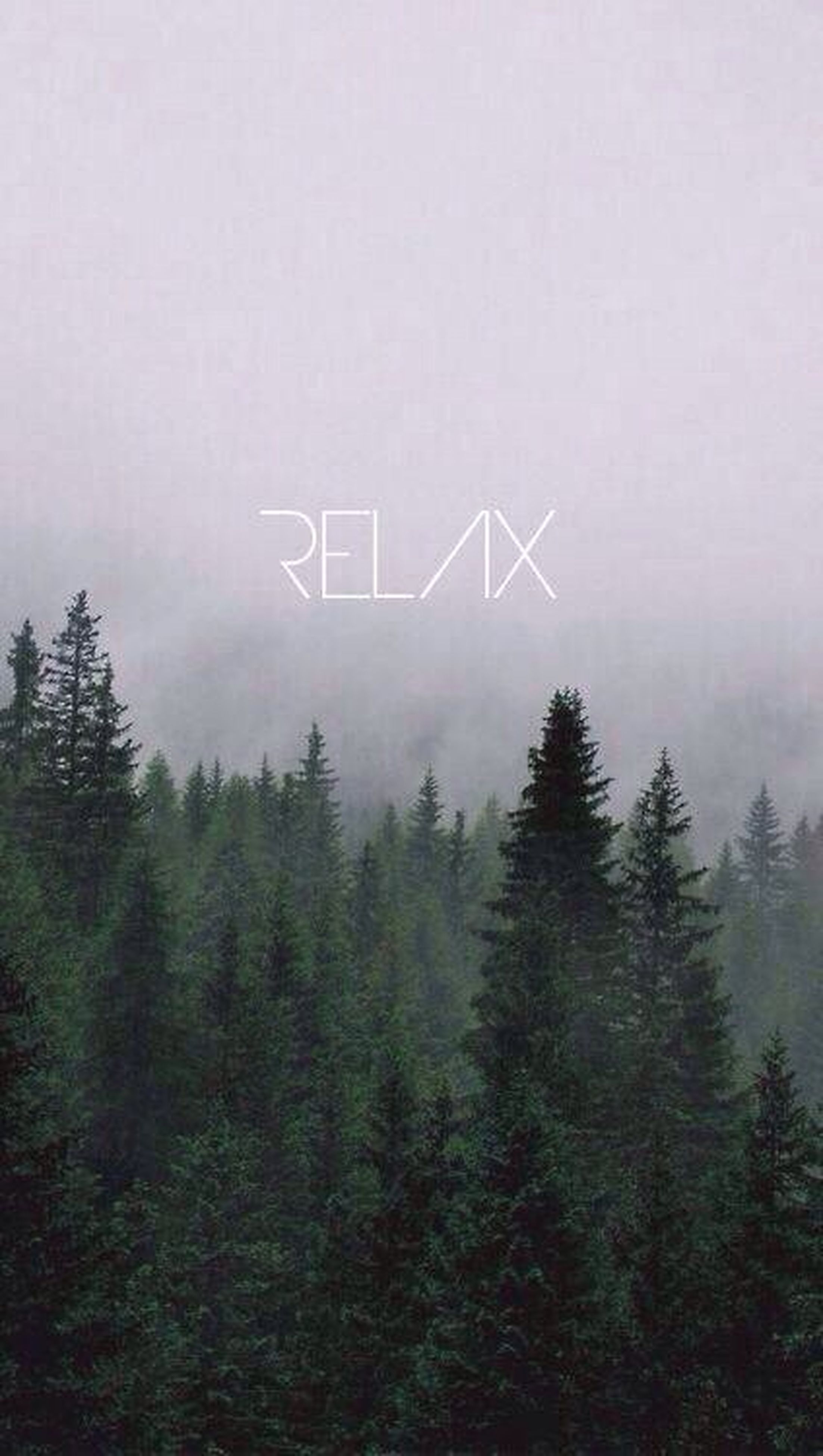 fog, tree, text, foggy, communication, western script, tranquility, growth, nature, weather, copy space, plant, tranquil scene, forest, day, information sign, beauty in nature, outdoors, no people