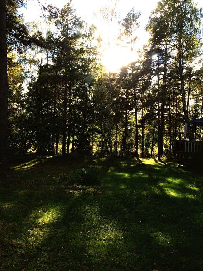 Autumn sun at our country house. Bådde Bobadly Ljusterö