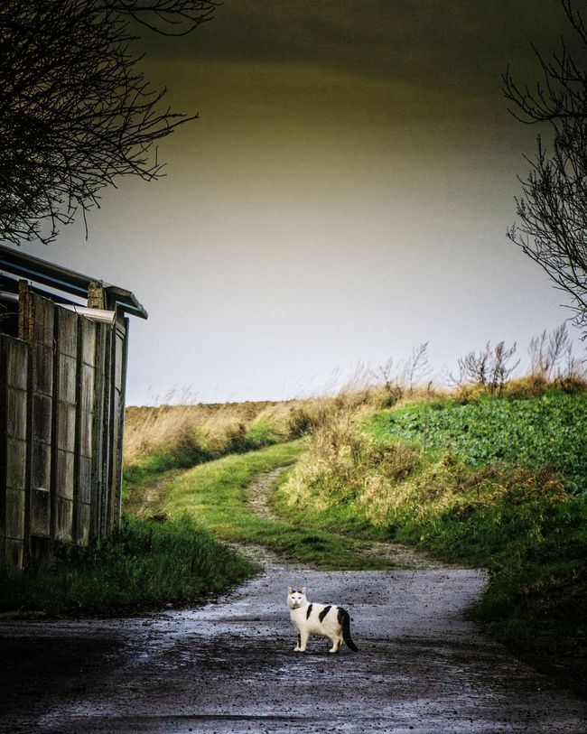 Au bout du chemin... Eye4photography  Authentic Moments Animal_collection Animal Photography Cat Cat Lovers Landscape_Collection Rural Scenes