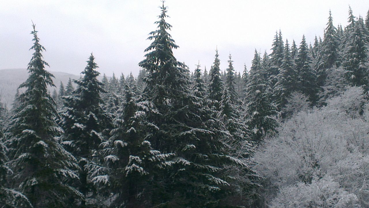 Pino! Trees Snow Born To Be Wild On The Road