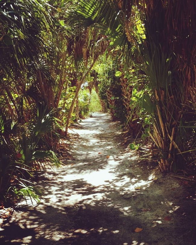 Pathway to paradise Happy Photography Beauty Vibrant Positive Vibes Tropical Photography Florida Outdoors Goodvibes Florida Life Paradise Nature Summer Surf Sea Ocean Beach Sun Trees Travel