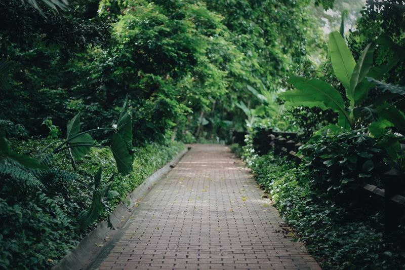 Plants Minimalism Singapore Perspectives Nature Nature_collection VSCO
