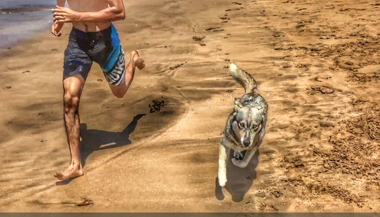 Taking Photos Enjoying Life Hanging Out Beach Sand Nature Photography Wildlife Husky Dog Wolf Running Quicksilver Swimshorts Swimwear Swimwearshoot