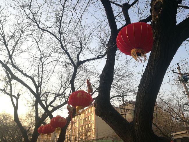 Red Hanging Outdoors Chinese Lantern Festival