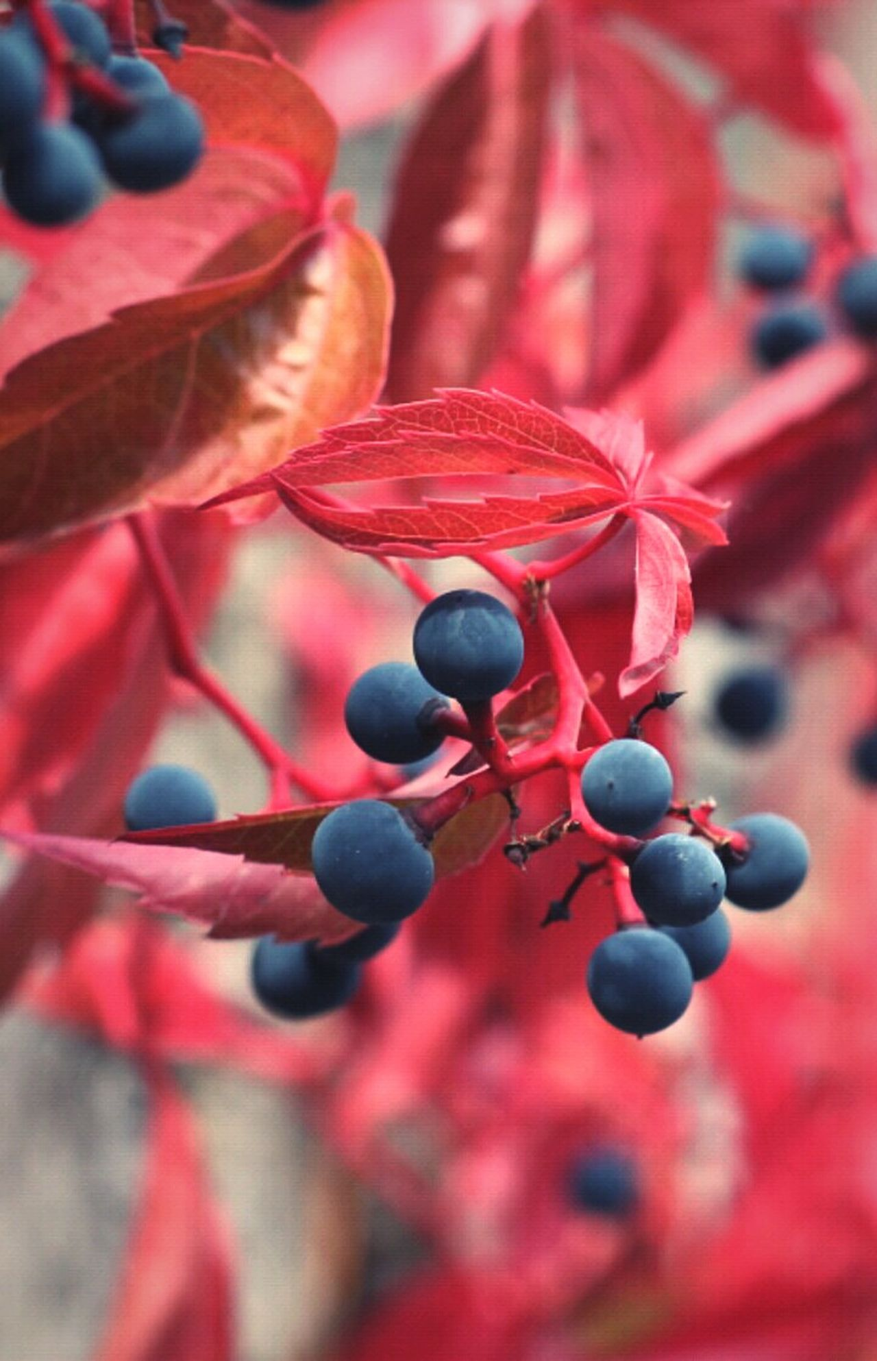 Red Nature Leafscape Red Close-up Plant Fruit Nature No People Outdoors Day Leaf EyeEm Nature Lover