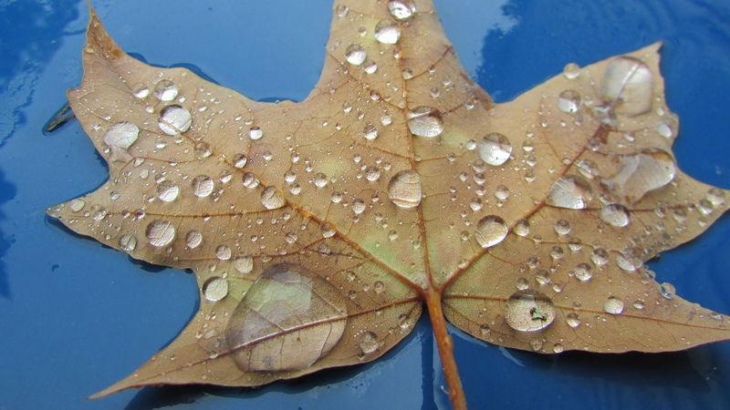 After The Rain Drops Of Rain Up Close & Personal Cadillac Michigan