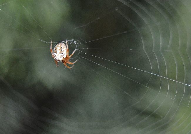 Spider in his beautiful web Abstract Close-up Focus On Foreground Insect Natural Pattern Pattern Spider Spider Web Web Zoology