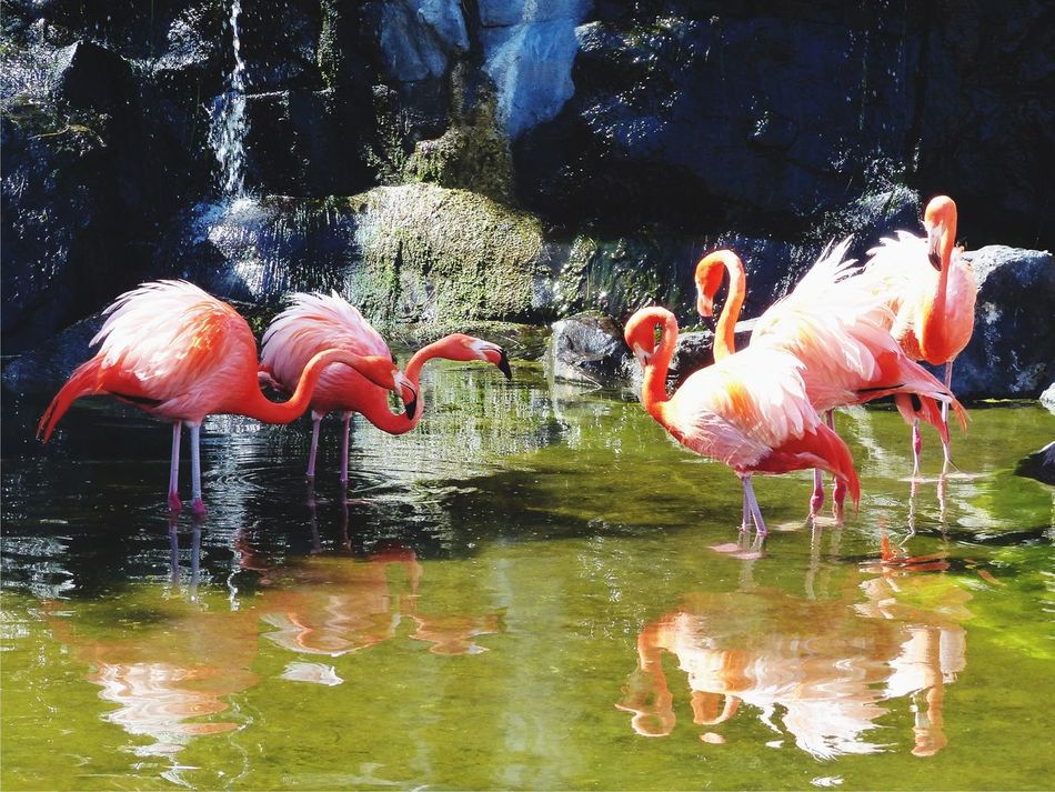 Pink Flamingos Fight For Girls