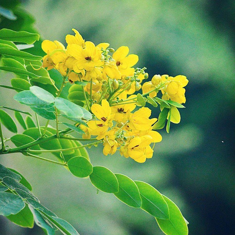 Go Green Diwali2014 Gagans_photography