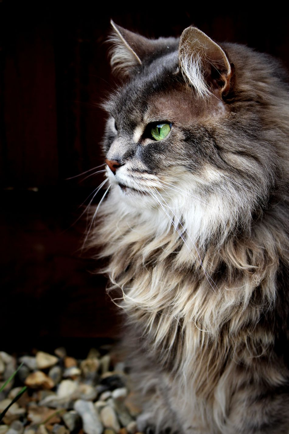 Kitty Pets Domestic Animals No People Portrait Day Close-up Outdoors Cute Photography Fur Greeneyes Fluffy Sunday Canon