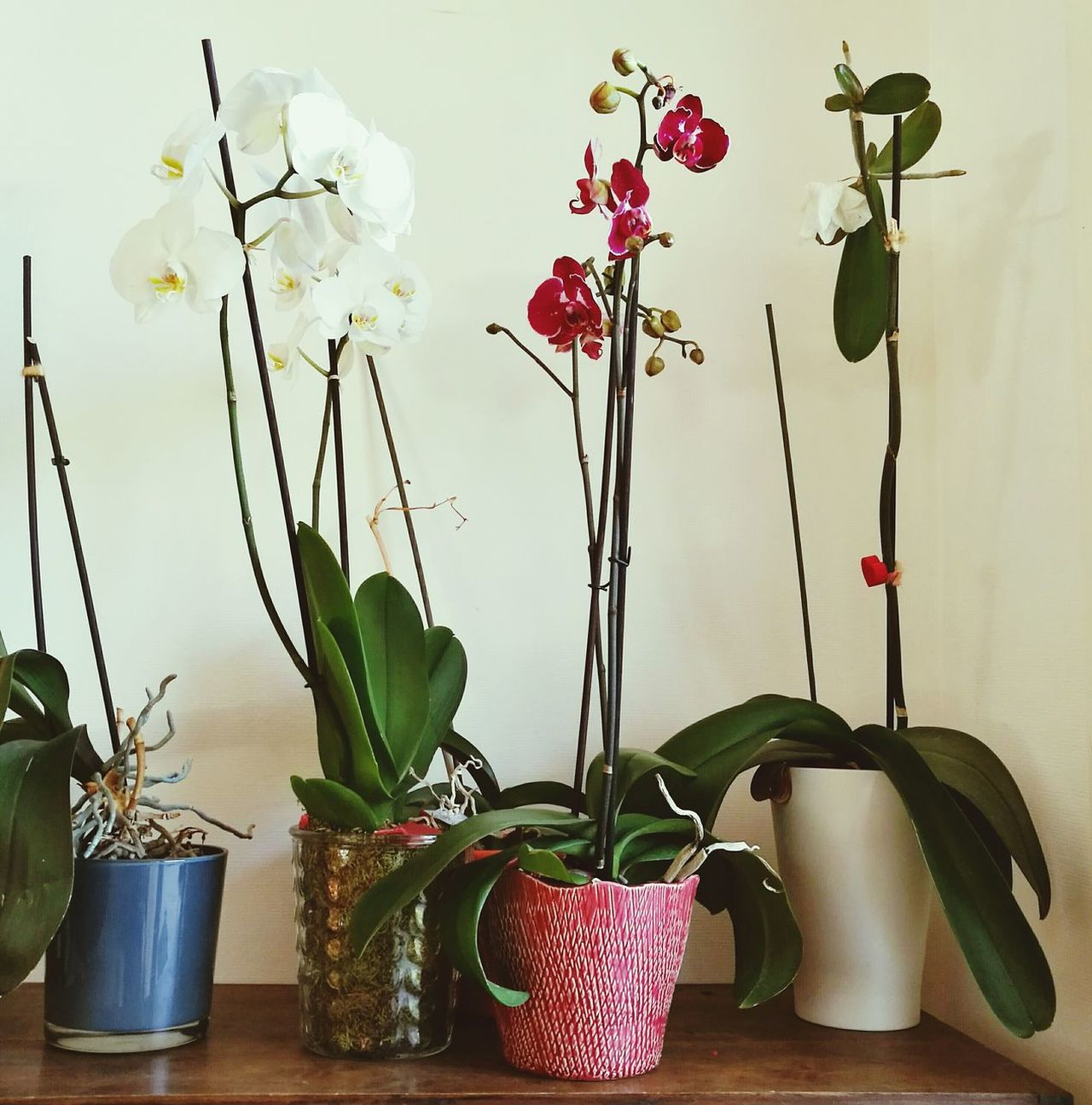 Plant Flower Vase Twig Nature No People Surreal Indoors  Aromatherapy Dried Plant Day