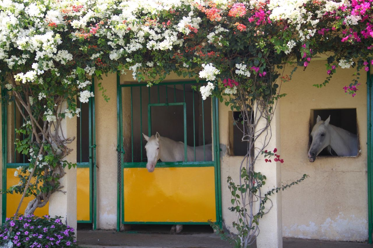 one animal, domestic animals, animal themes, mammal, pets, flower, domestic cat, cat, plant, feline, growth, no people, architecture, built structure, day, dog, building exterior, outdoors, nature