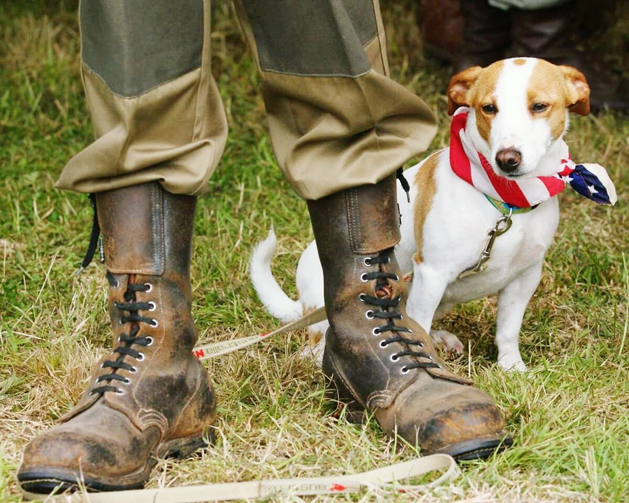 Beautiful stock photos of veteran's day, Animal Themes, Boot, Day, Dog