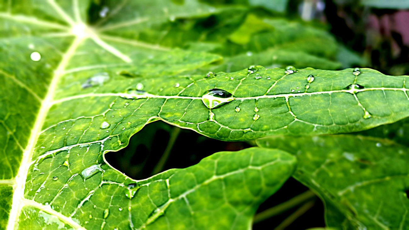 Watet Droplets Natute