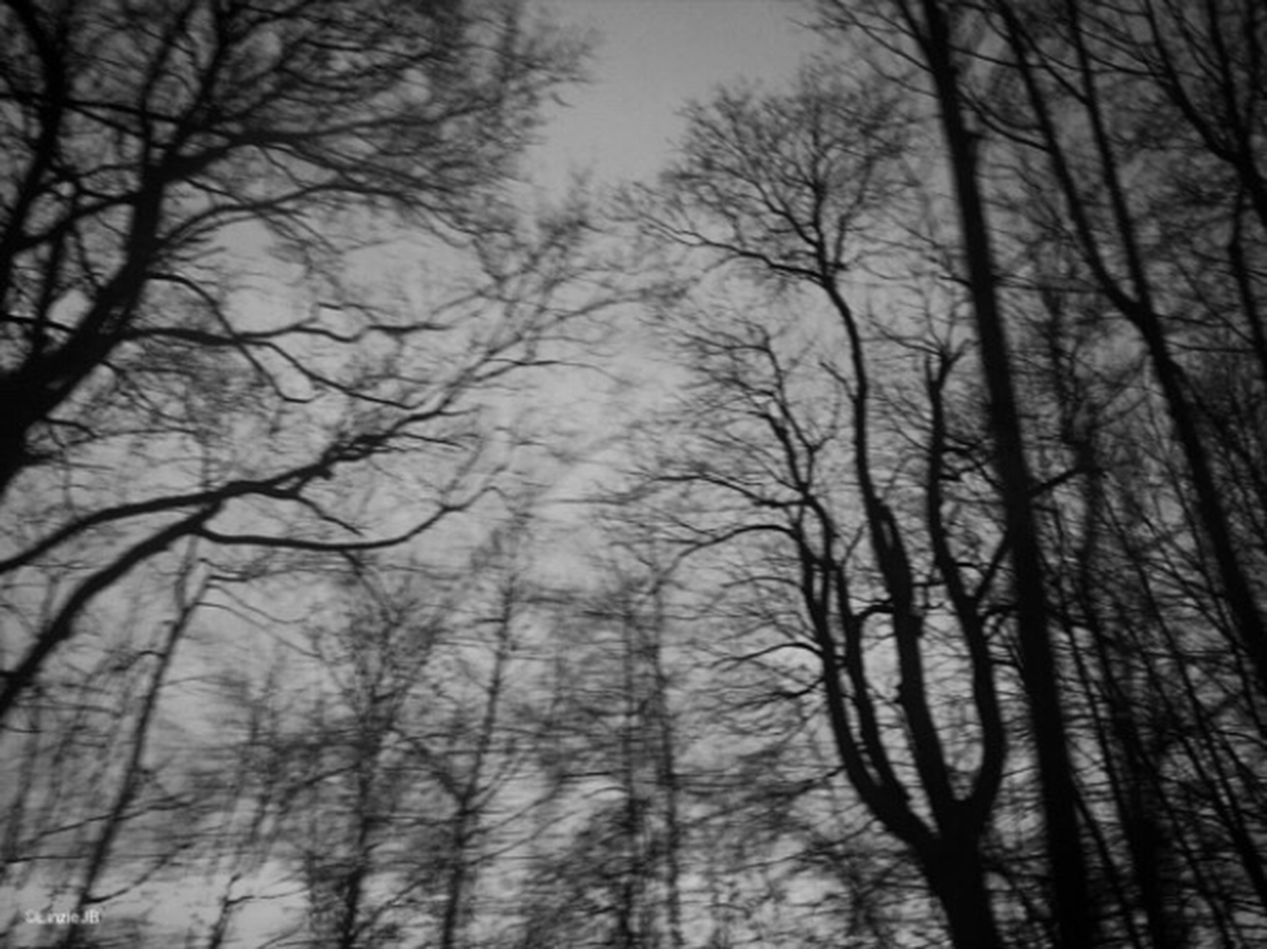 bare tree, tree, branch, low angle view, silhouette, tranquility, sky, tree trunk, nature, tranquil scene, beauty in nature, scenics, forest, dusk, outdoors, growth, cloud - sky, no people, weather, woodland