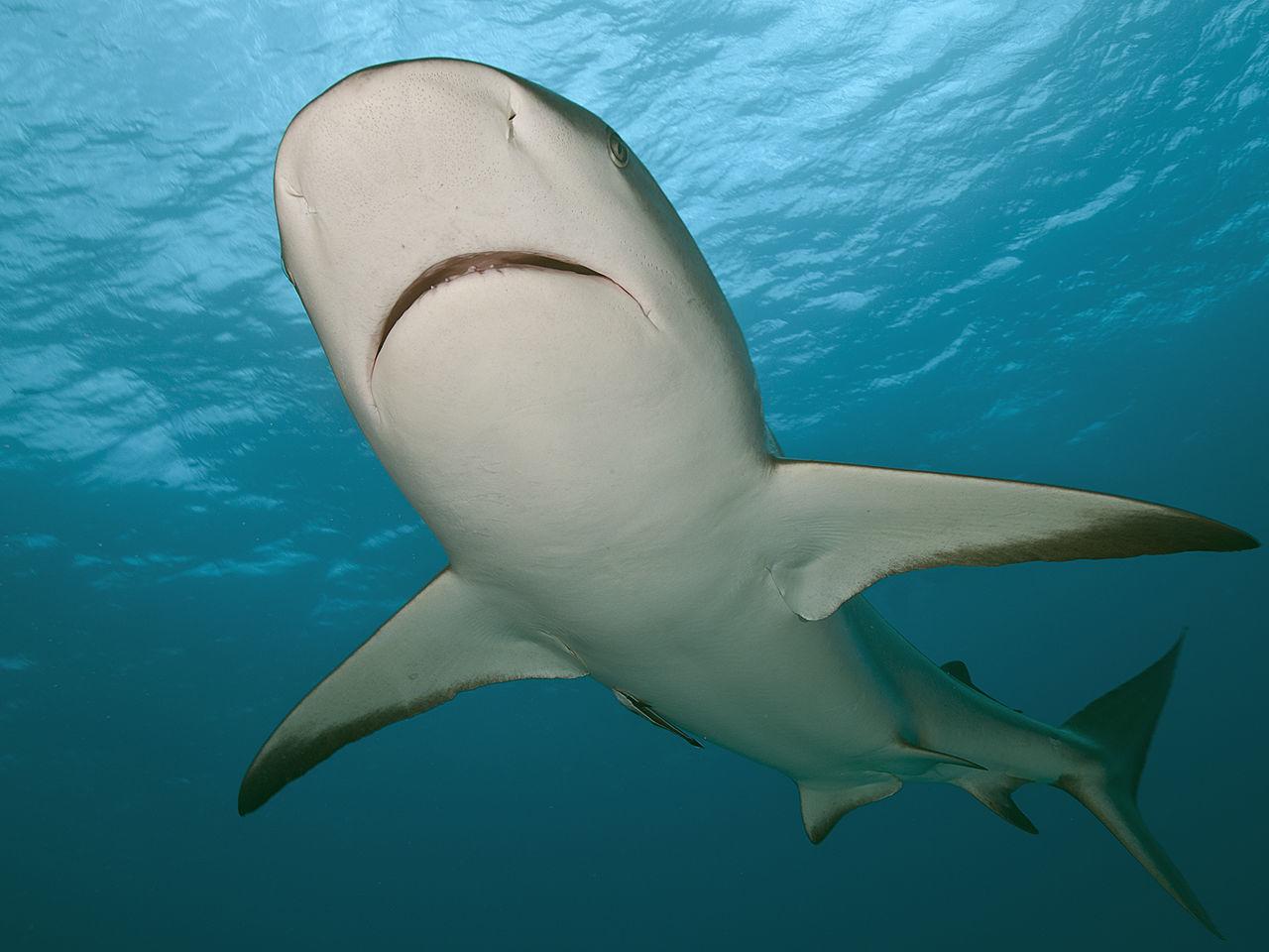 Beautiful stock photos of bahamas, Animal Themes, Animal Wildlife, Animals In The Wild, Blue