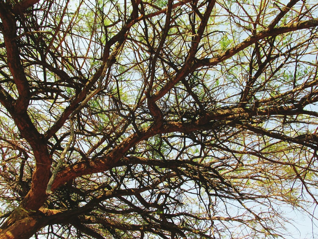 tree, nature, low angle view, branch, day, tranquility, beauty in nature, outdoors, no people, growth, tranquil scene, full frame, backgrounds, sky, forest, close-up