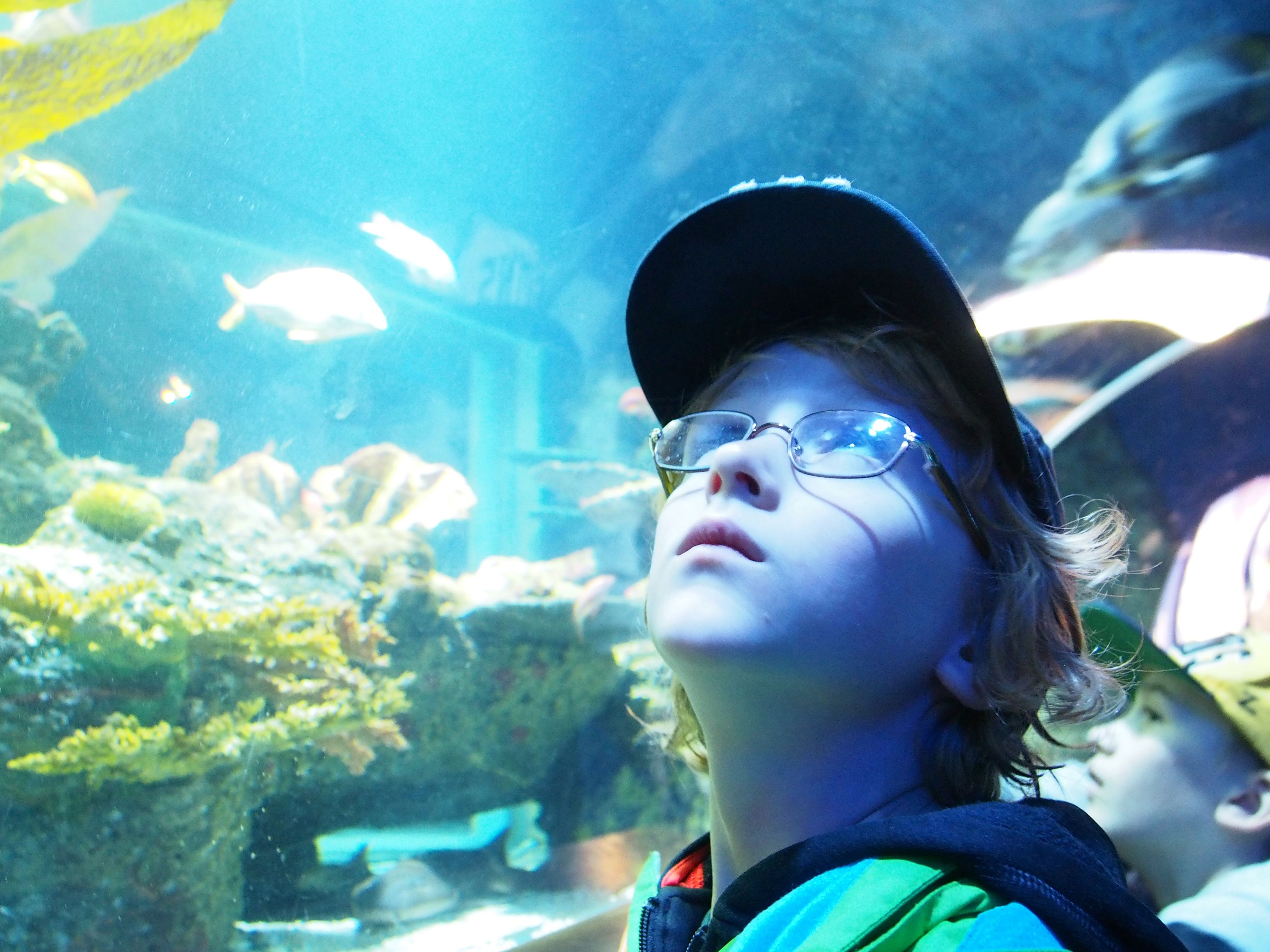 Wow! IKidsas a shark! Kids aquarium