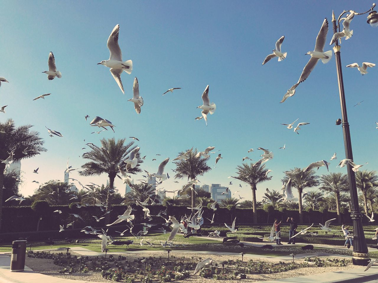 IPhoneography Bird Photography Nature Birds Flying Seagull Mydubai Dubai Zabeel Iphonephotography