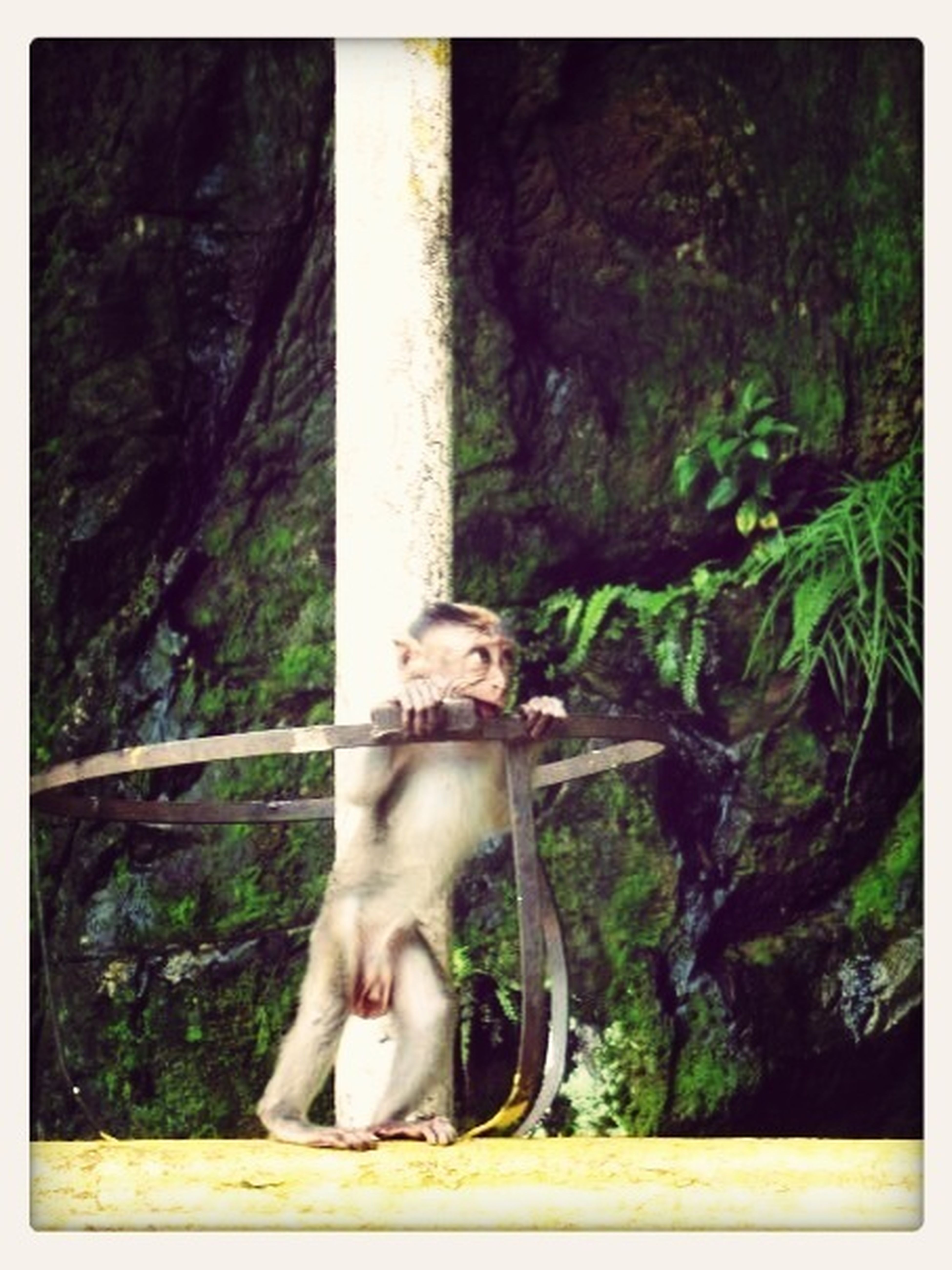 Monkey Nature Malaysia Monkey Business
