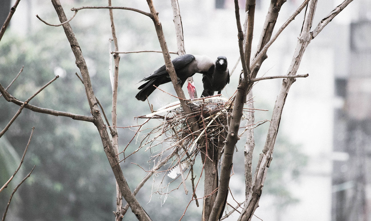 Just parenting things Baby Crow Bird Bird Nest Black Crow Crows Family Nature Parents Welcome To Black