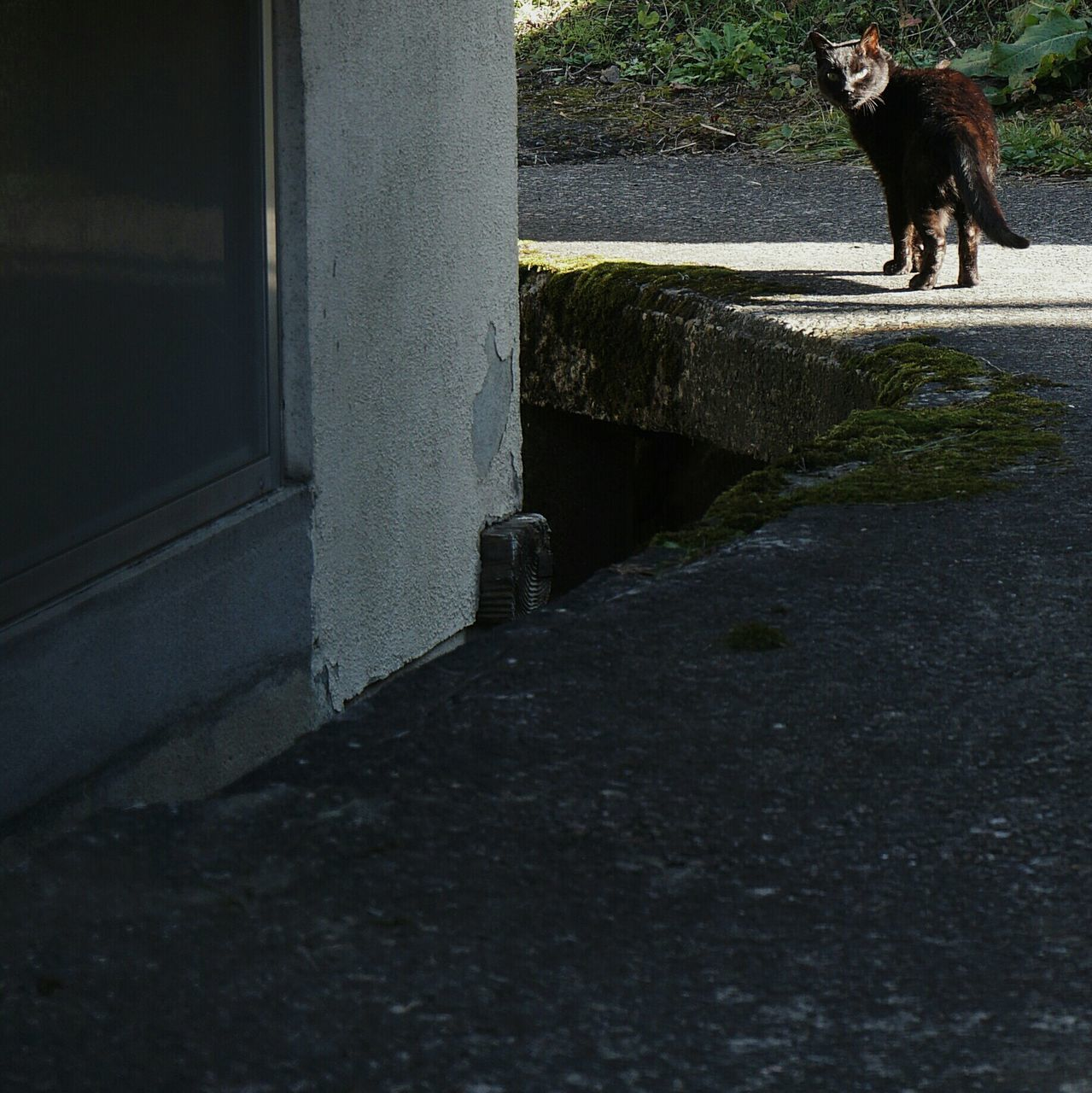 Cat Standing On Walkway By Building
