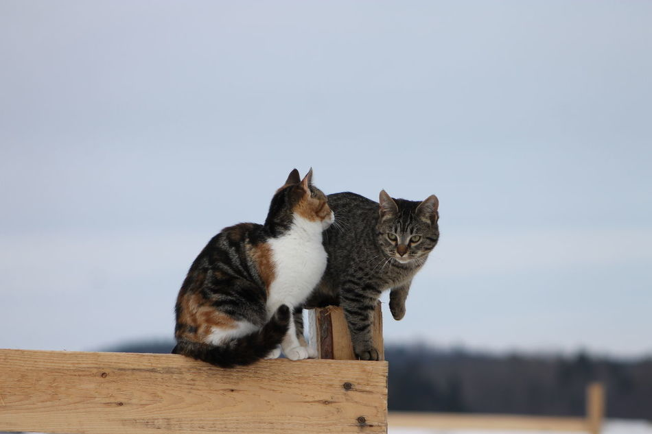 Animal Behavior Barn Cats Day Domestic Animals Domestic Cat Feline Mammal Nature No People Outdoors Pets Stable Life Tabby Cat Tortoiseshell Cat EyeEmNewHere