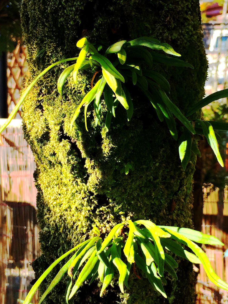 growth, green color, plant, no people, tree, leaf, outdoors, nature, close-up, day, ivy, freshness, beauty in nature