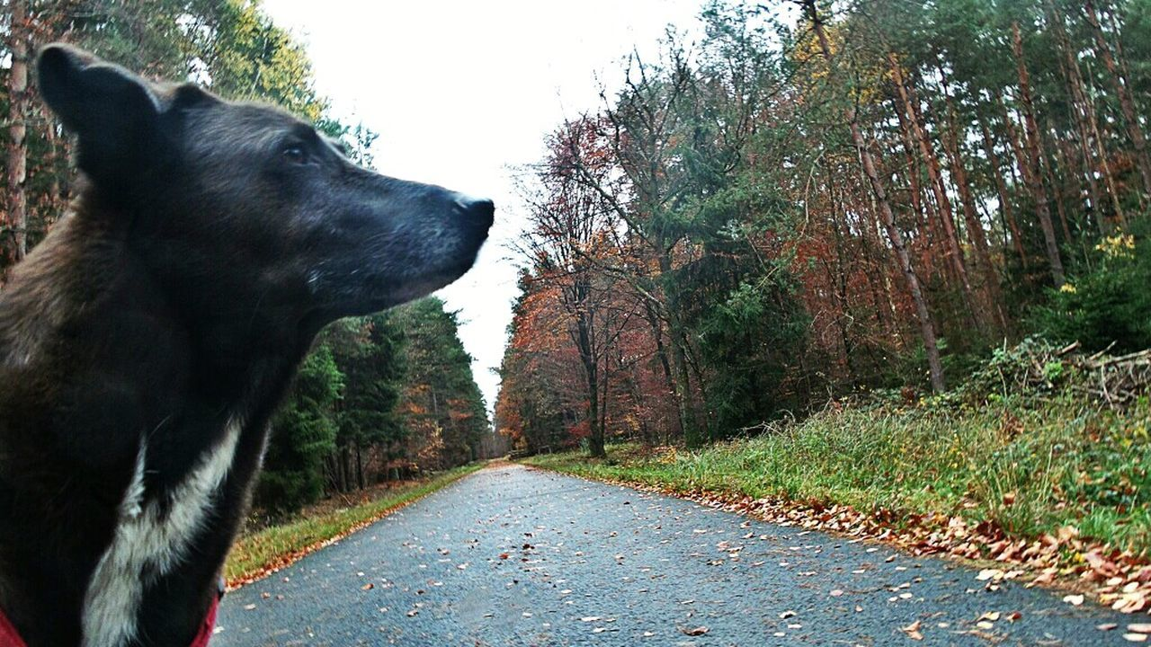 Watchful Dog A Walk In The Woods Autumn Colors Perfect Match My Dog Is Cooler Than Your Kids No People Natural Beauty Nature Harmony Forrest Photography I Love My Dog Showcase : November