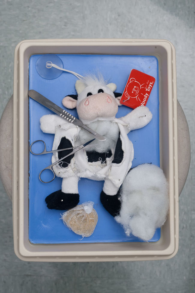 Blue Bovine Close-up Cow Cut Day Dead Animal Dissecting  Dissection No People Scalpel Series Stuffed Toy Stuffing Suction Cup Toy White White Color