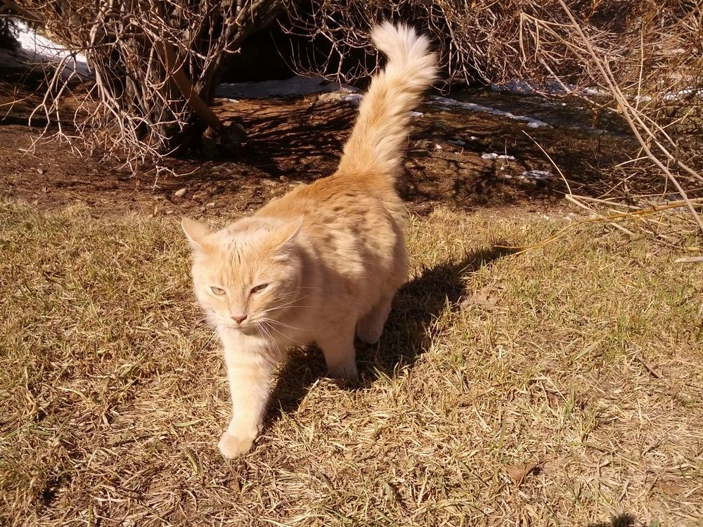 King Cat King Cat Animal Themes Day Domestic Animals Domestic Cat Feline Full Length Grass Looking At Camera Mammal Nature No People One Animal Outdoors Pets Portrait Sitting
